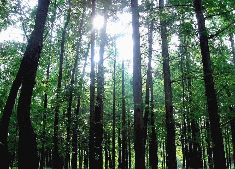 Forest_Osaka_Japan