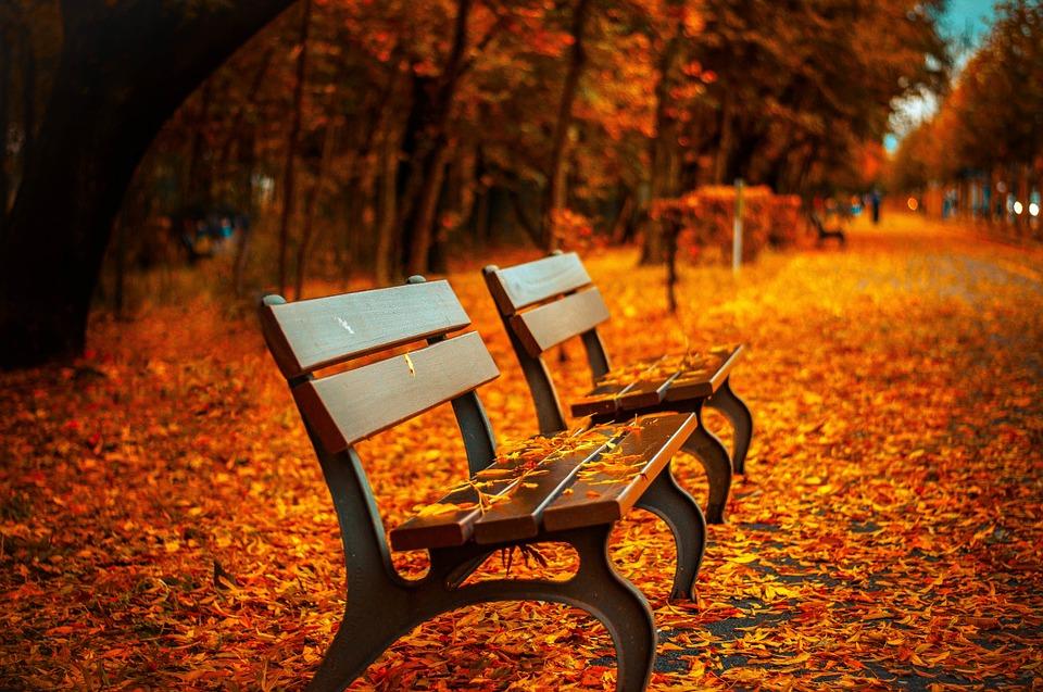 벤치 가을 공원 휴식 앉아 공원 벤치 나무 나뭇잎 색상 bench-560435_960_720