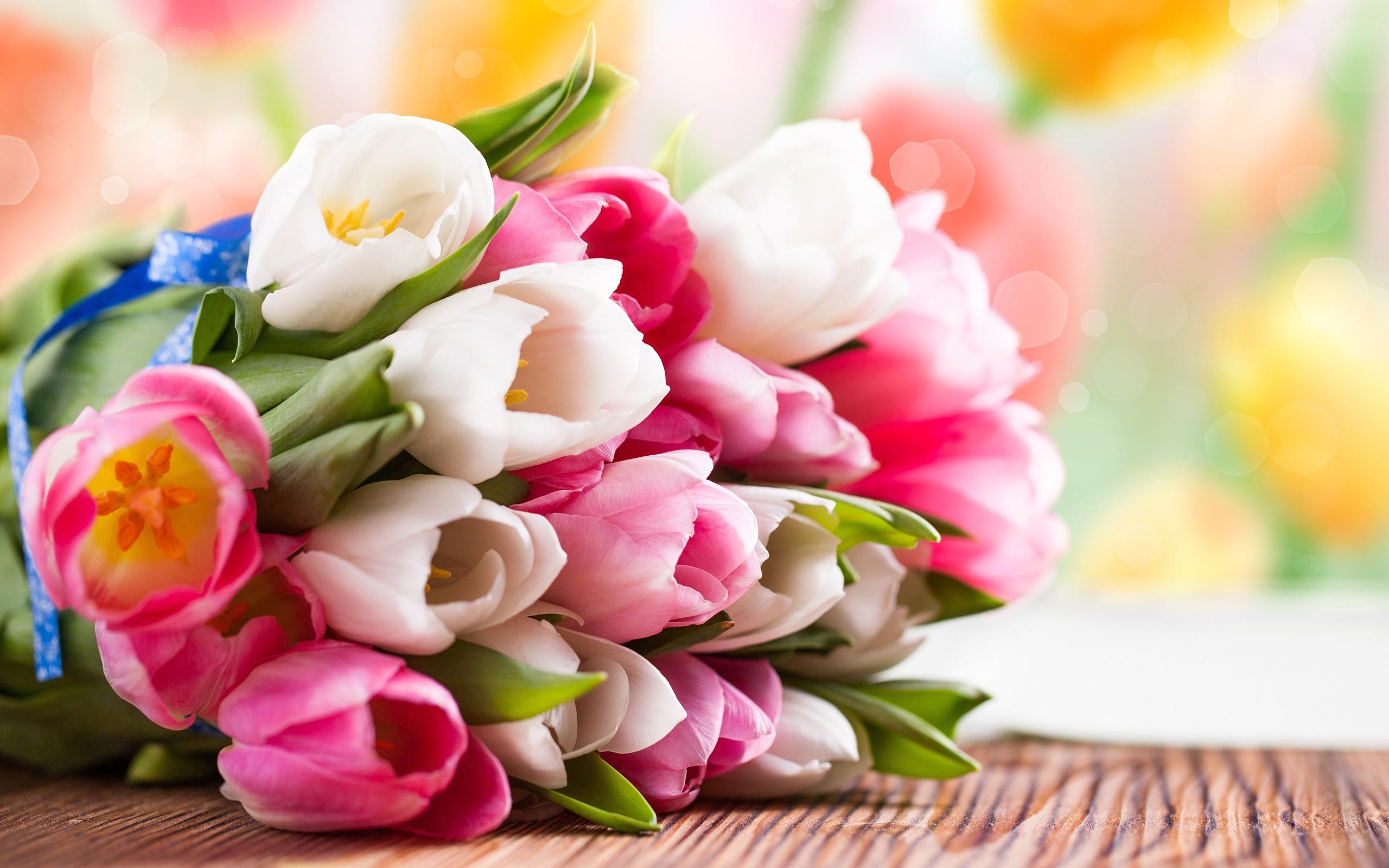 웨딩_부케_Pink-and-white-tulip-flower-bouquet_2560x1600, 사진=magic4walls닷com