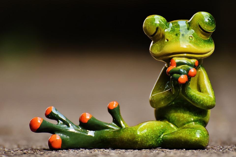 frog-1672865_960_720