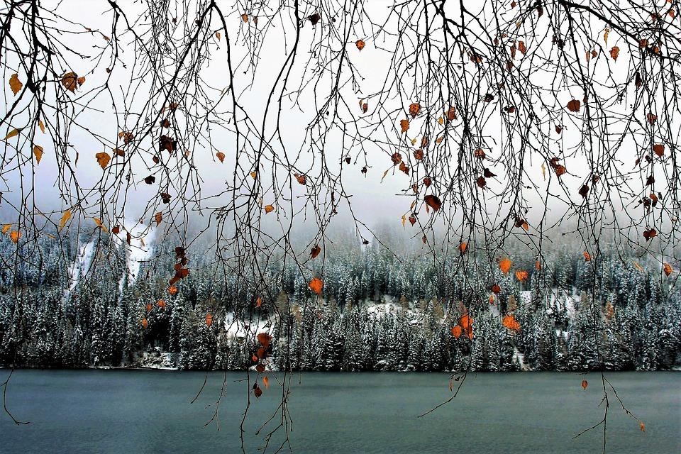 twigs-2941230_960_720 겨울 나무 강 가지 자작나무 노란색 잎 가을 낙엽 풍경